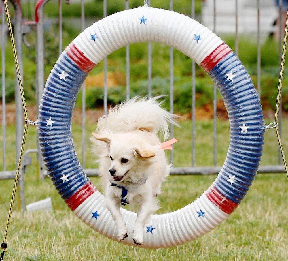 Beginner dog agility class in Boston, MA.