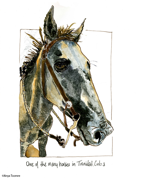 Here's the horse that graciously allowed me to ride her on an excursion to see a waterfall near Trinidad, Cuba. This is a drawing for Inktober, a challenge to draw an ink picture everyday in October and then post online to share. Adding other media is okay. There are daily prompts to follow or not. I chose to work from travel pictures. Right now I'm working from my Cuba photos.