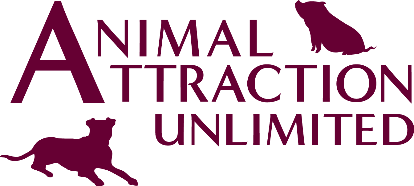 dog training Los Angeles | pig aggression training | Southern California pig trainer | Animal Attraction Unlimited
