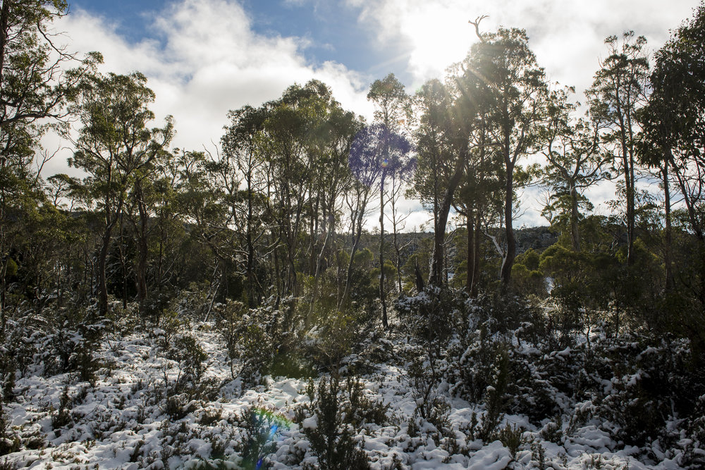 Cradle Mountain 2017. Photo By Amy Brown.jpg.jpg
