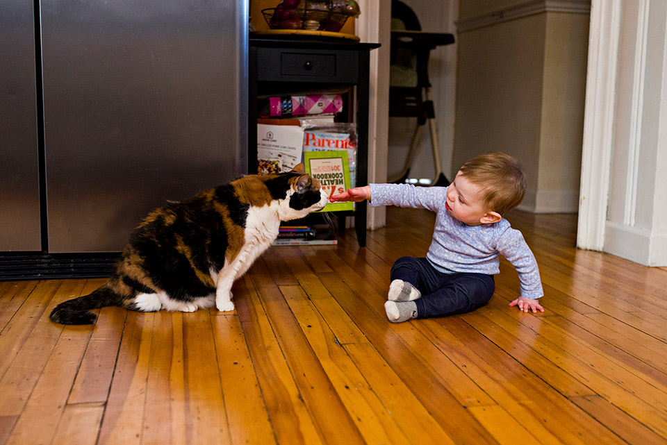 baby girl playing with black and orange cat on kitchen floor west hartford connecitcut family documentary photography
