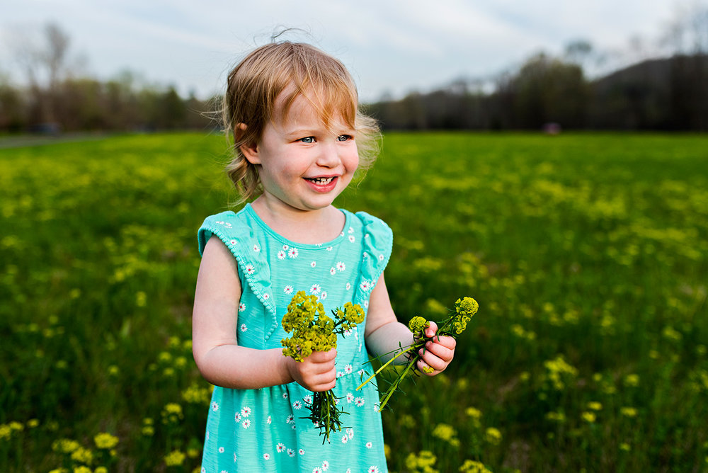 toddler girl picking yellow flowers in field at haddam meadows in haddam connecticut lifestyle maternity photography