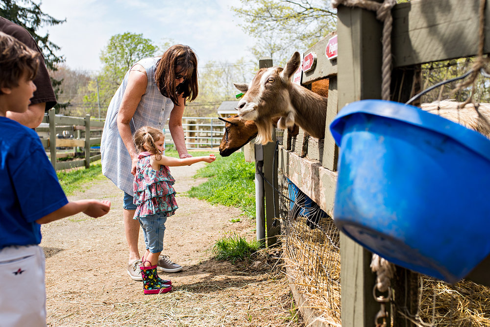 feeding goats ray of light farm family photographer ct
