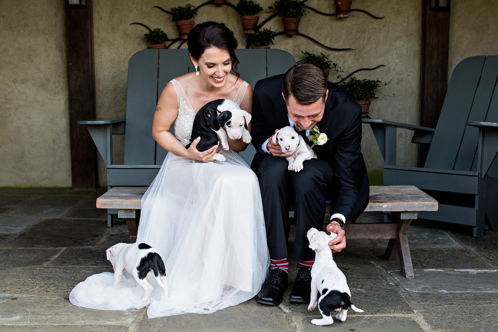bride and groom with rescue puppies. puppies instead of bouquets. ct wedding photographer