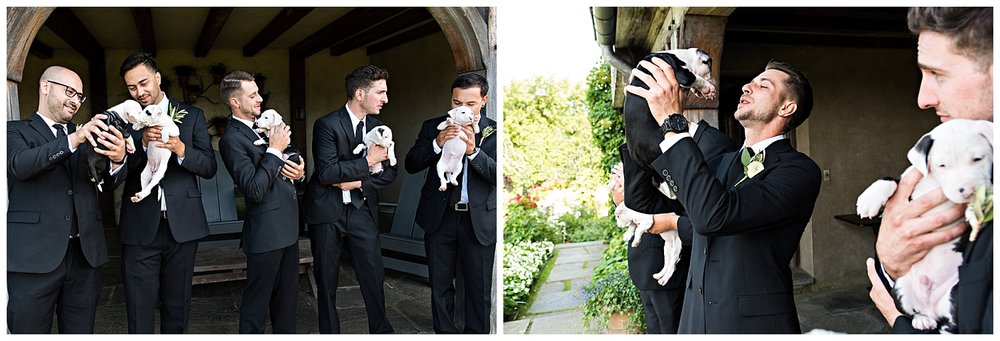 wedding part portraits with rescue puppies. ct elopement photographer
