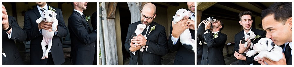 wedding photography with rescue puppies. connecticut elopement photographer