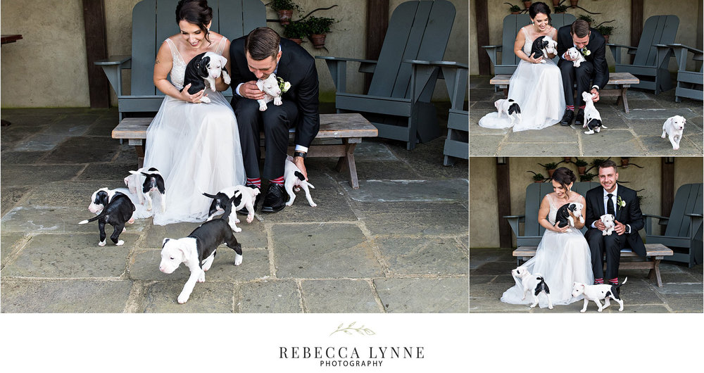 bride and groom with rescue puppies at wedding