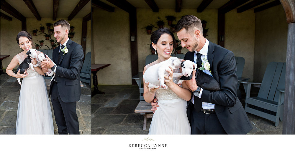 bride and groom with rescue puppies for adoption during wedding photography