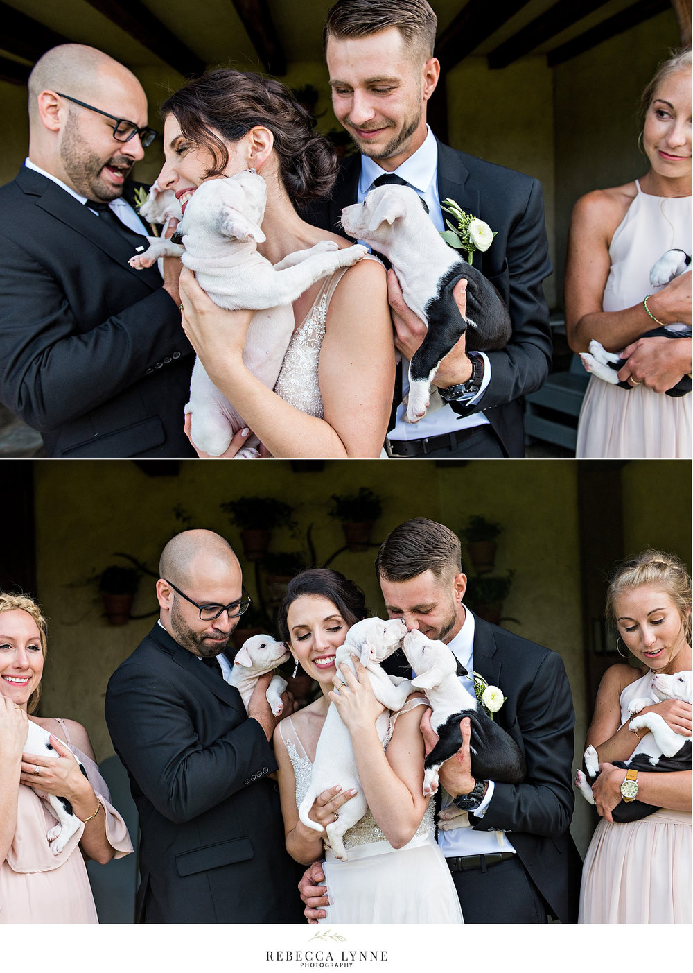 wedding puppies 14.jpg