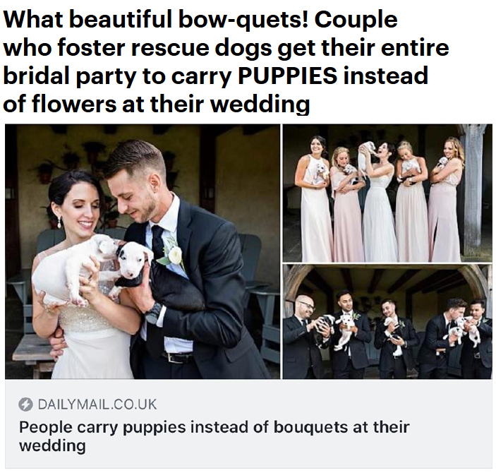 connecticut wedding photographer. elopement photographer ct. puppies instead of bouquets