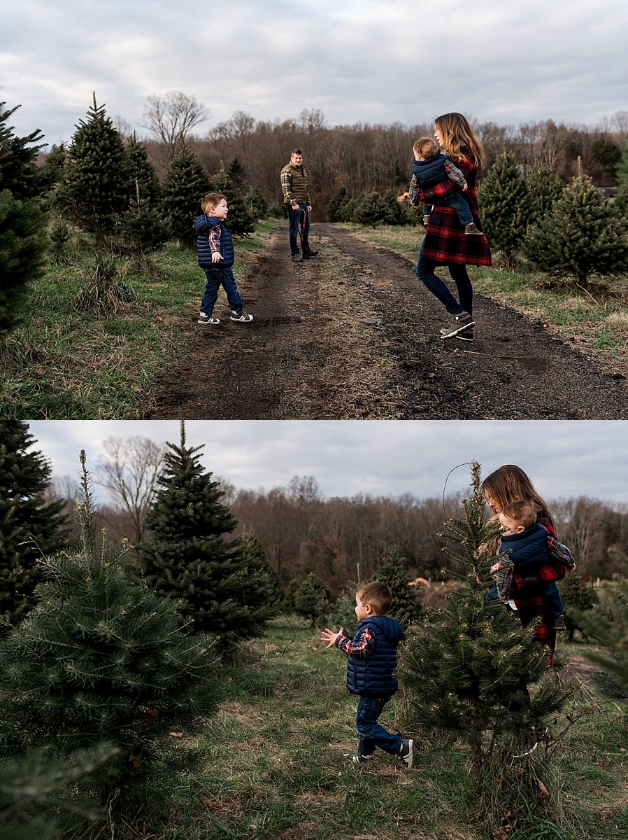 christmas tree farm connecticut