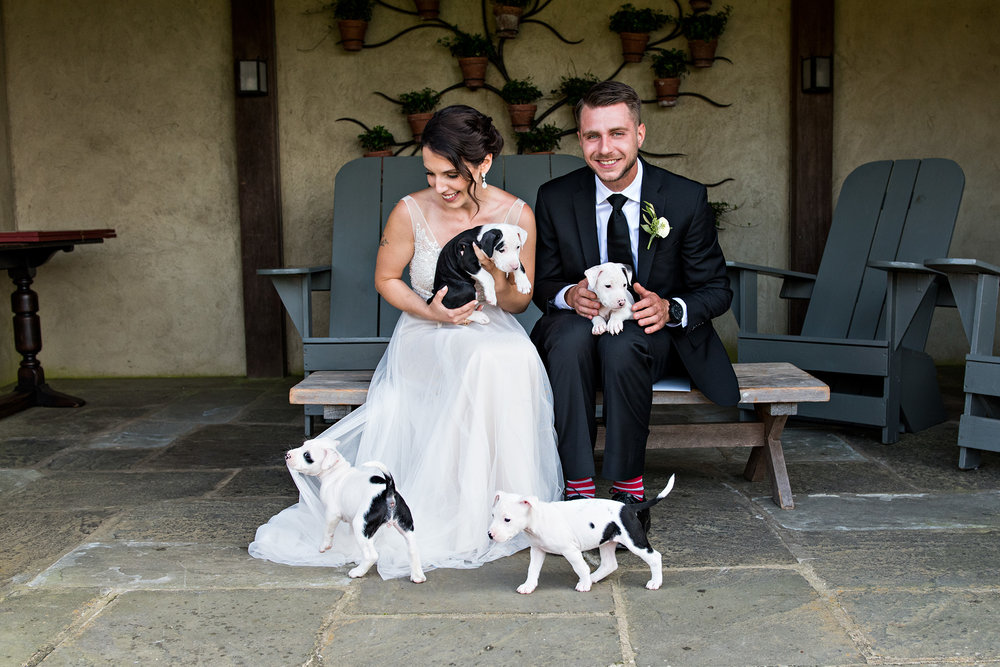 Becky and John with their foster puppies on their wedding day at Topsmead State Forsest in Litchfield, CT