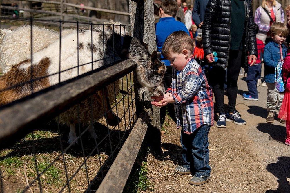 Birthday boy feeding a goat at Stamford Nature Center. CT family photographer