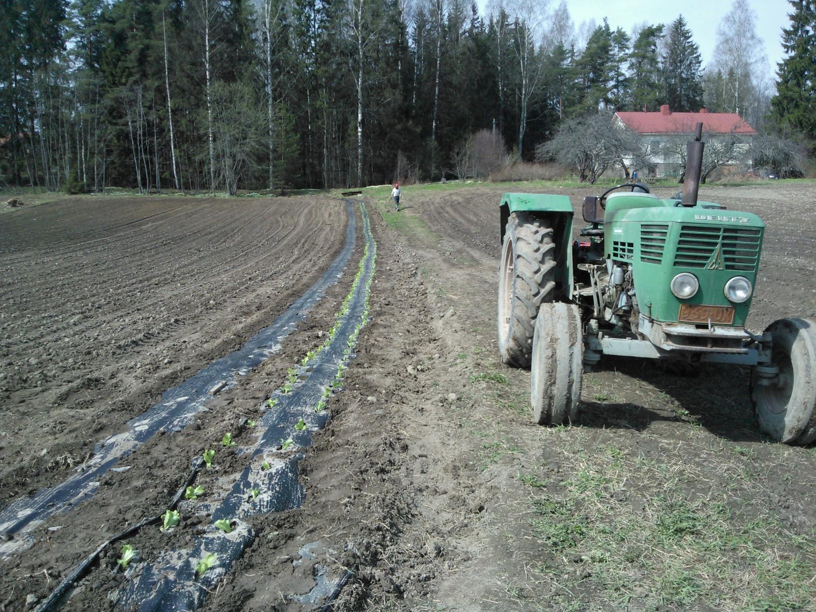 Deutz-traktori pellon laidassa ensimmäisten salaattirivien vieressä 9.5.2013