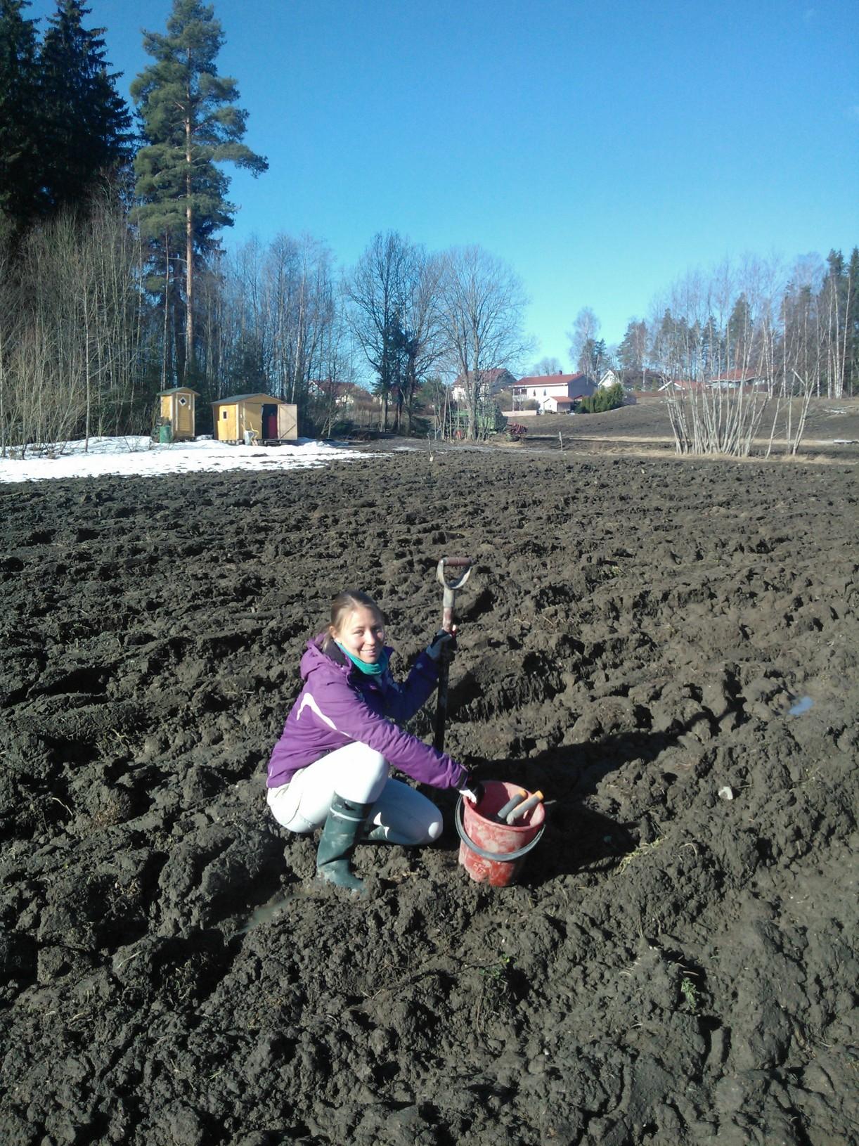 Pauliina-peltoharjoittelijan ottama kuva maa-analyysin otosta