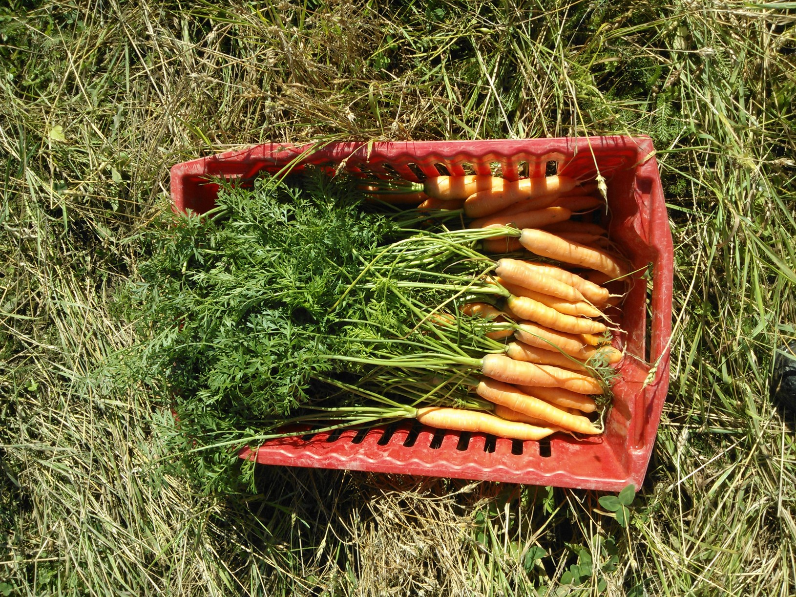 Porkkanat Kalasatamaan lähdössä