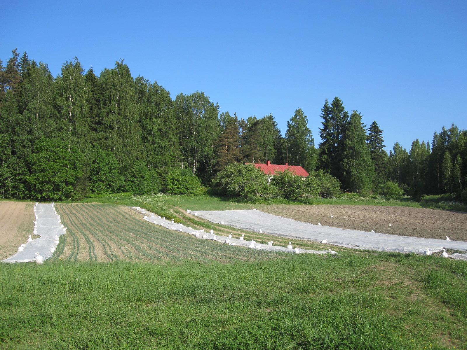 Meidän pelto