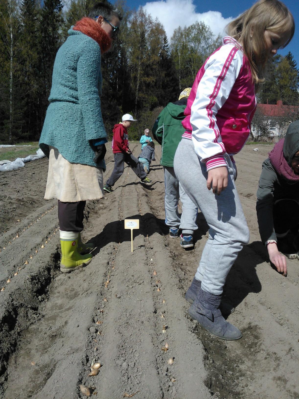 Tulevia opettajia & 3. luokkalaisia istuttamassa sipulia