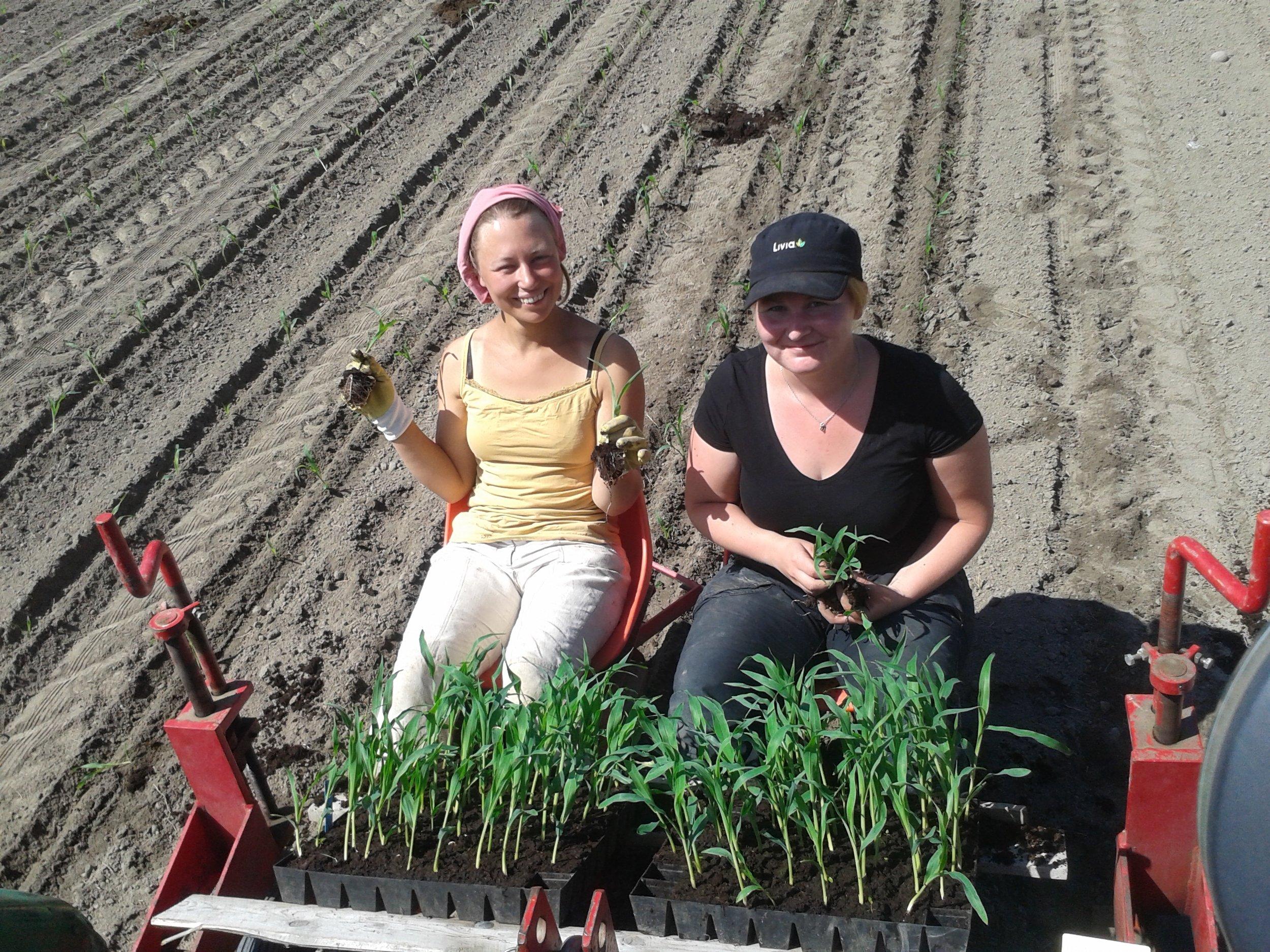 Heidi & Anniina maissin istutuksessa
