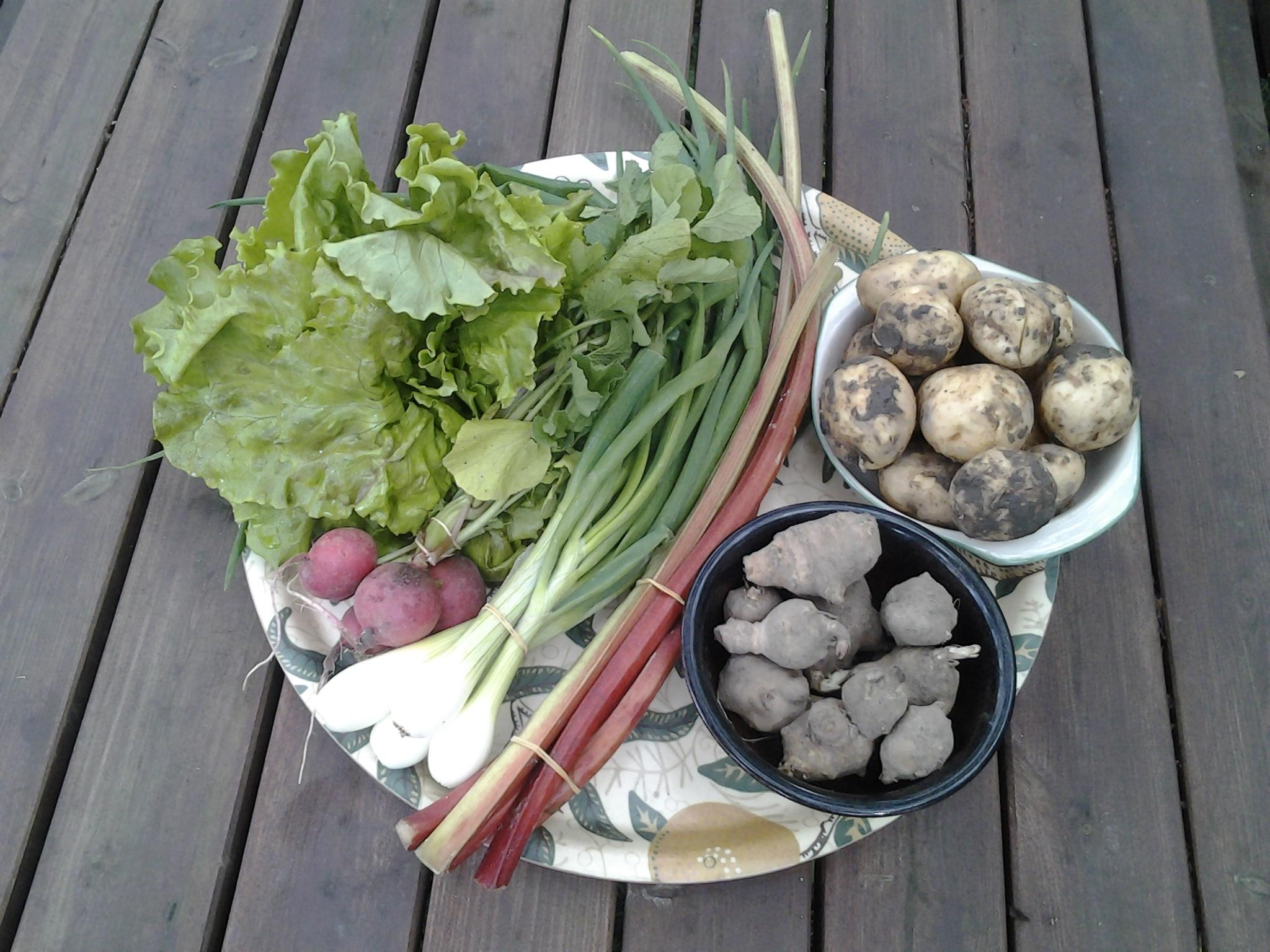 salaatinkerä 255 g, retiisinippu 188 g, sipulinippu 330 g, raparperiaa 248 g, maa-artisokkia 364 g ja perunoita 996 g