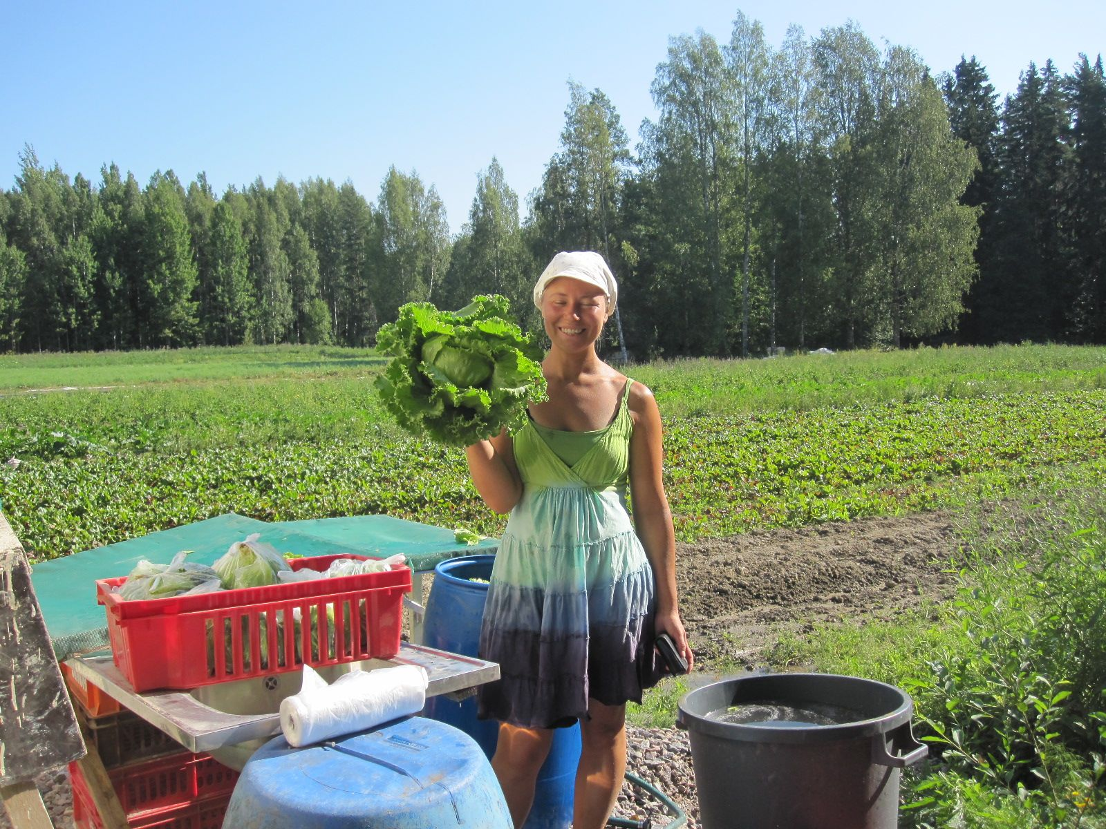Heidin on yllättänyt iso salaatti sadon pesupaikalla
