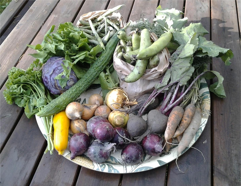Yrttinippu (basilikaa, persiljaa) 44 g, kyssäkaali 548 g,  pinaattia 200 g, kurkku 189 g, nauriit 163 g,  kesäkurpitsa 128 g, keltasipulit 175 g, punasipulit 442 g,  vihreät pavut 490 g, härkäpavut 670 g, punajuuret 375 g ja porkkanat 278 g.