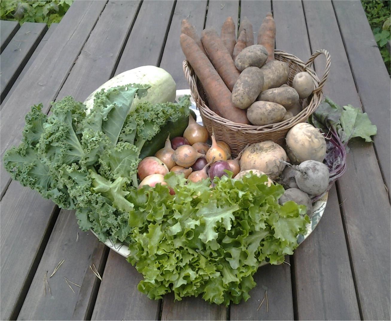 Perunat 1005 g, porkkanat 1446 g, punajuuret 407 g, salaatti 105 g, lehtikaali 163 g, omenat 237 g, kurpitsa 1362 g, kesäkurpitsa 288 g, lantut 801 g, keltasipulit 383 g ja punasipulit 152 g.