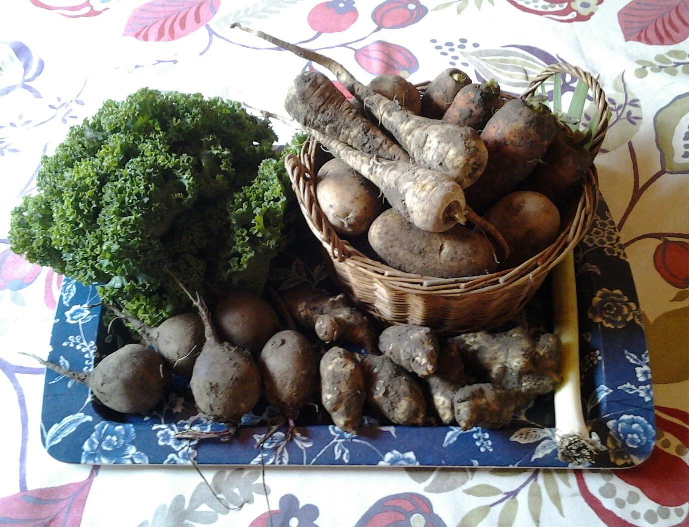 Lehtikaali 199 g, punajuuret 417 g, maa-artisokat 405 g, perunat 1250 g, palsternakat 261 g ja porkkanat 1173 g.