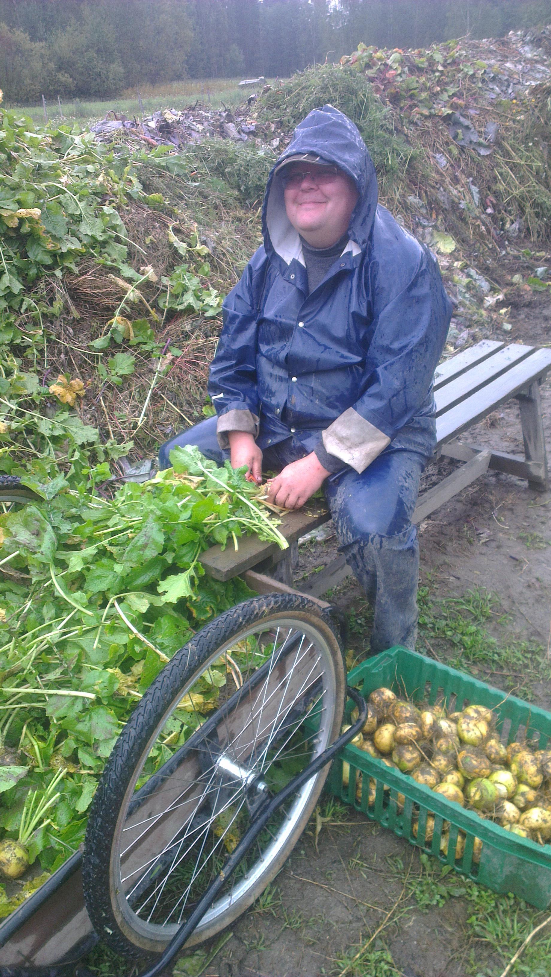 Timon taas löysi traktorin selästä  tai nauriiden parista