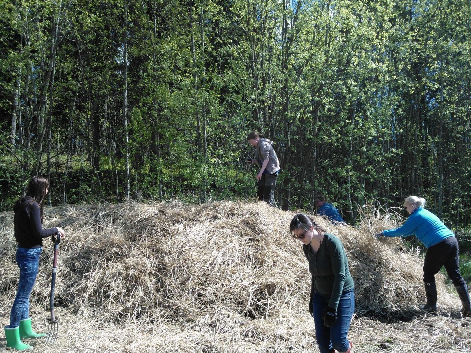 Vanhan kompostin kuivitus