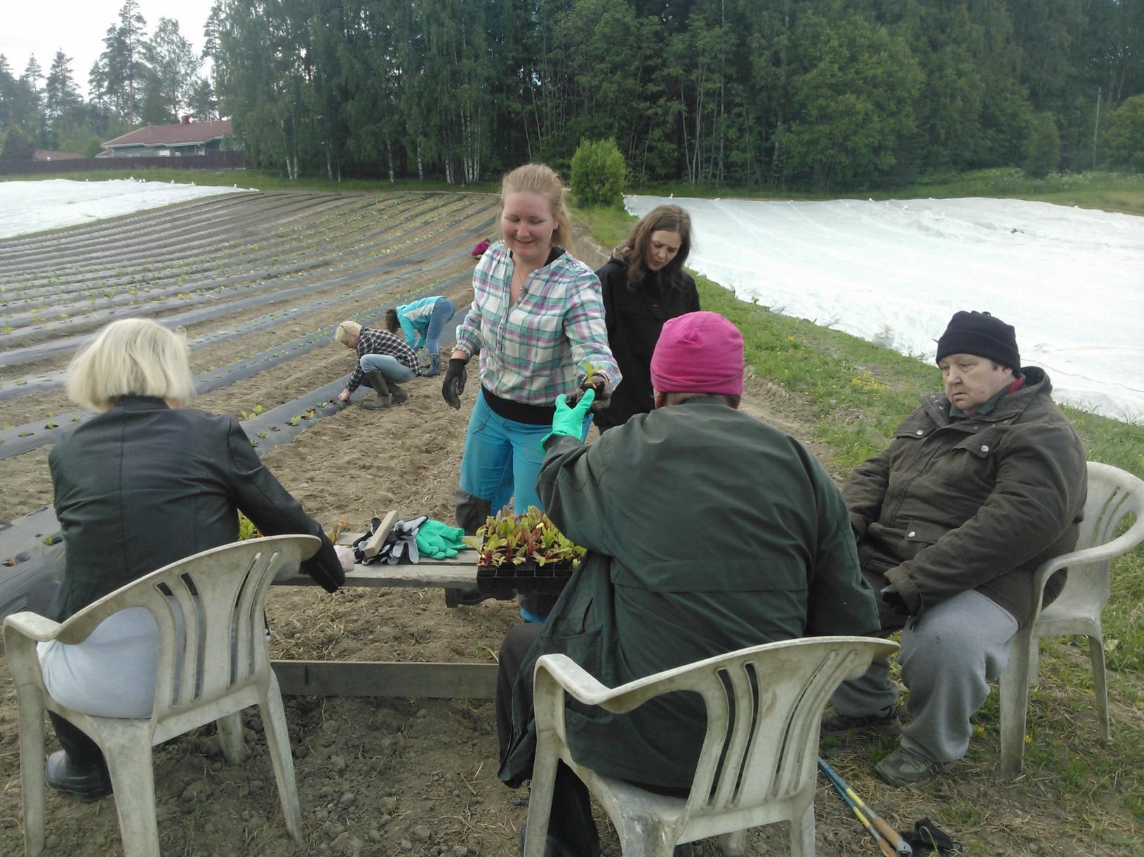 Green care-ryhmä 17.6. istuttamassa mangoldia
