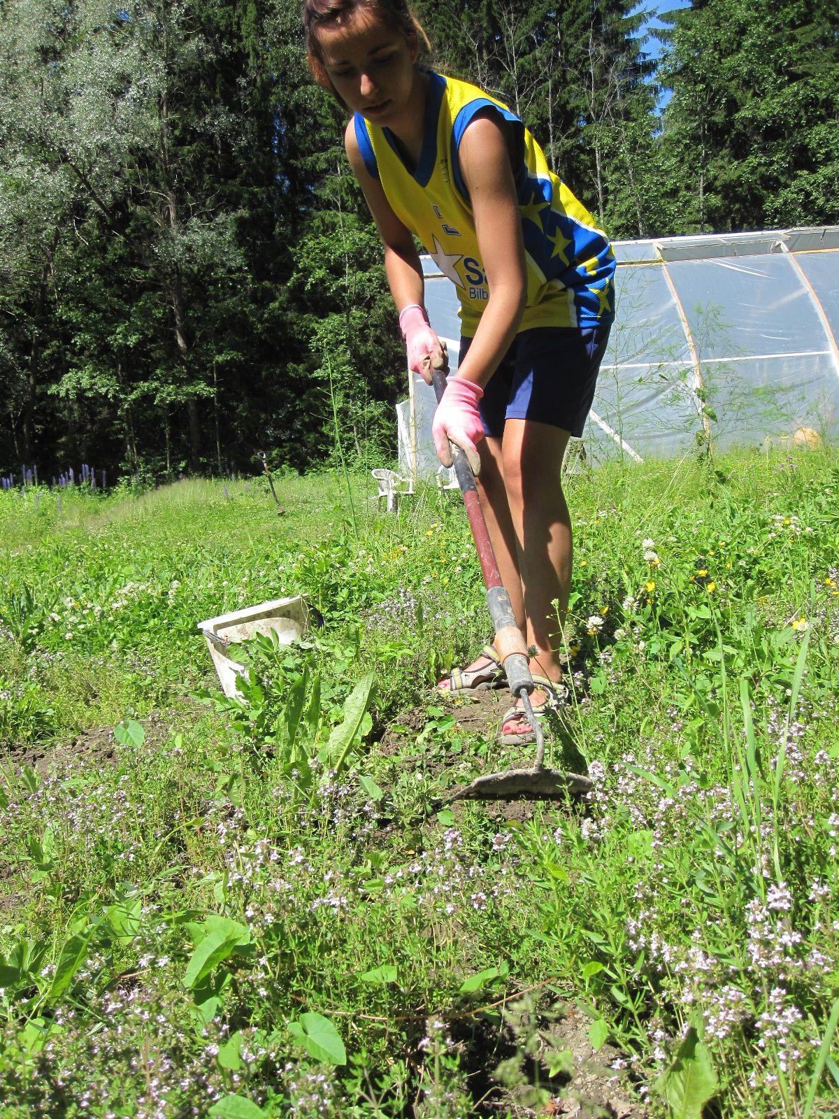 Espanjalaistyttö haraa timjamin välejä puutarhalla