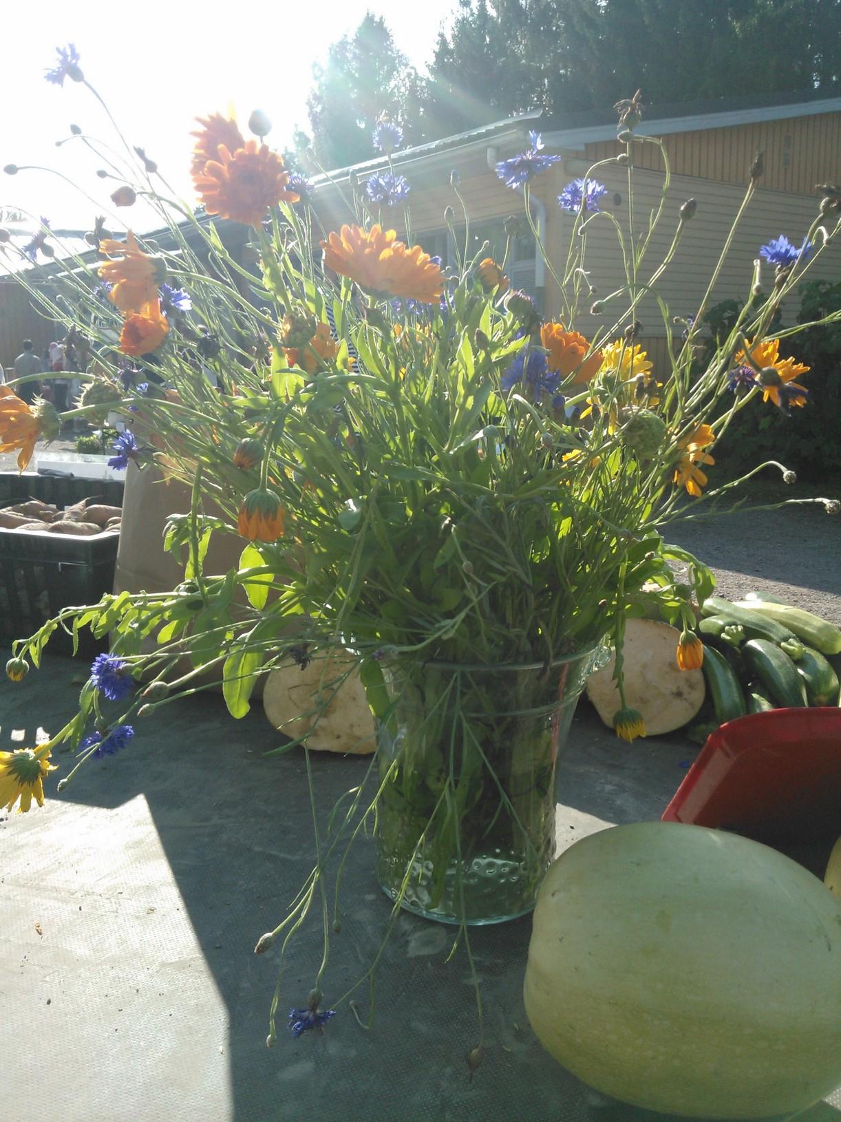 Oman pellon kukkasia
