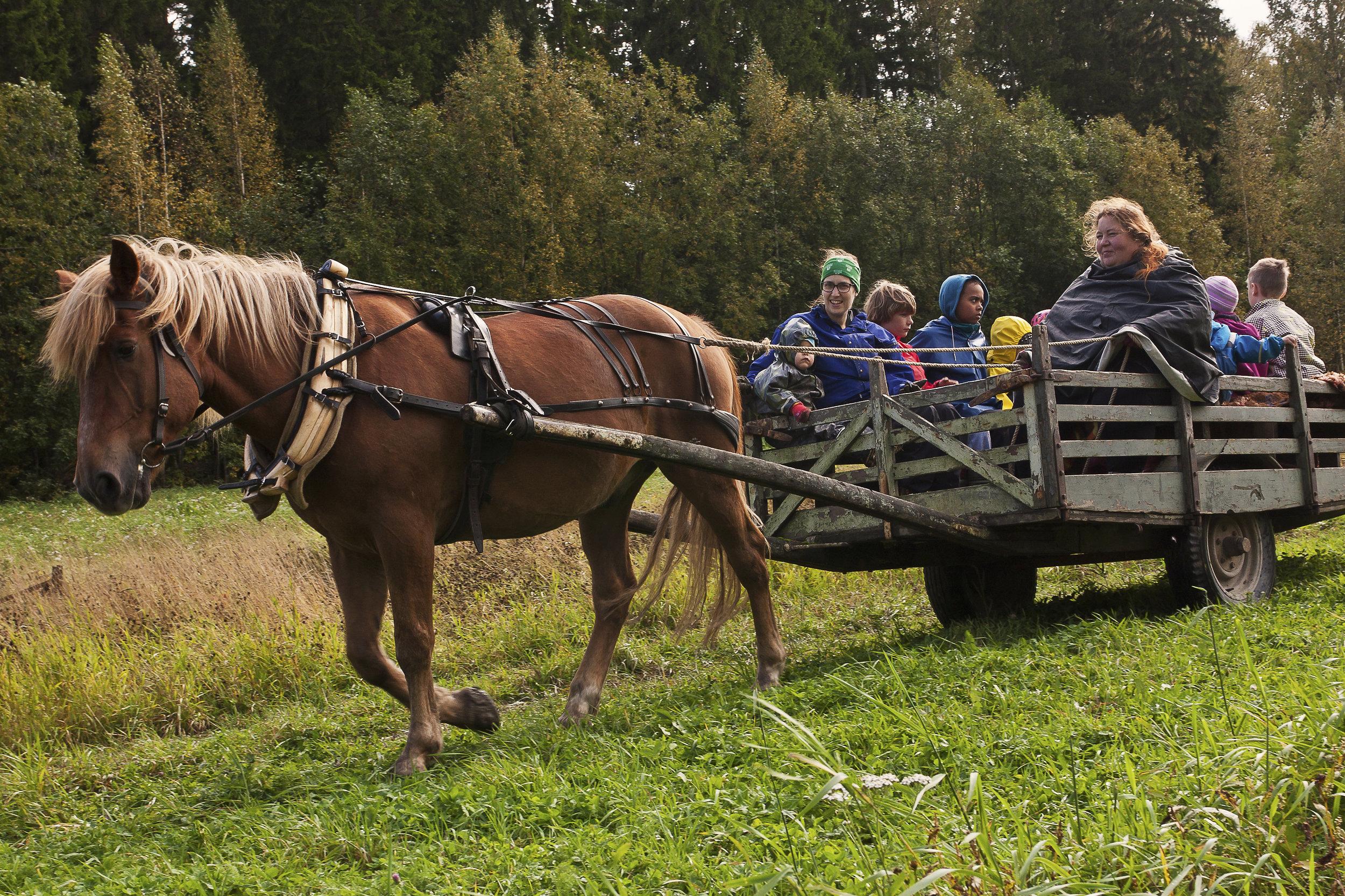 Hevoskärryajelutusta Uuraksella.