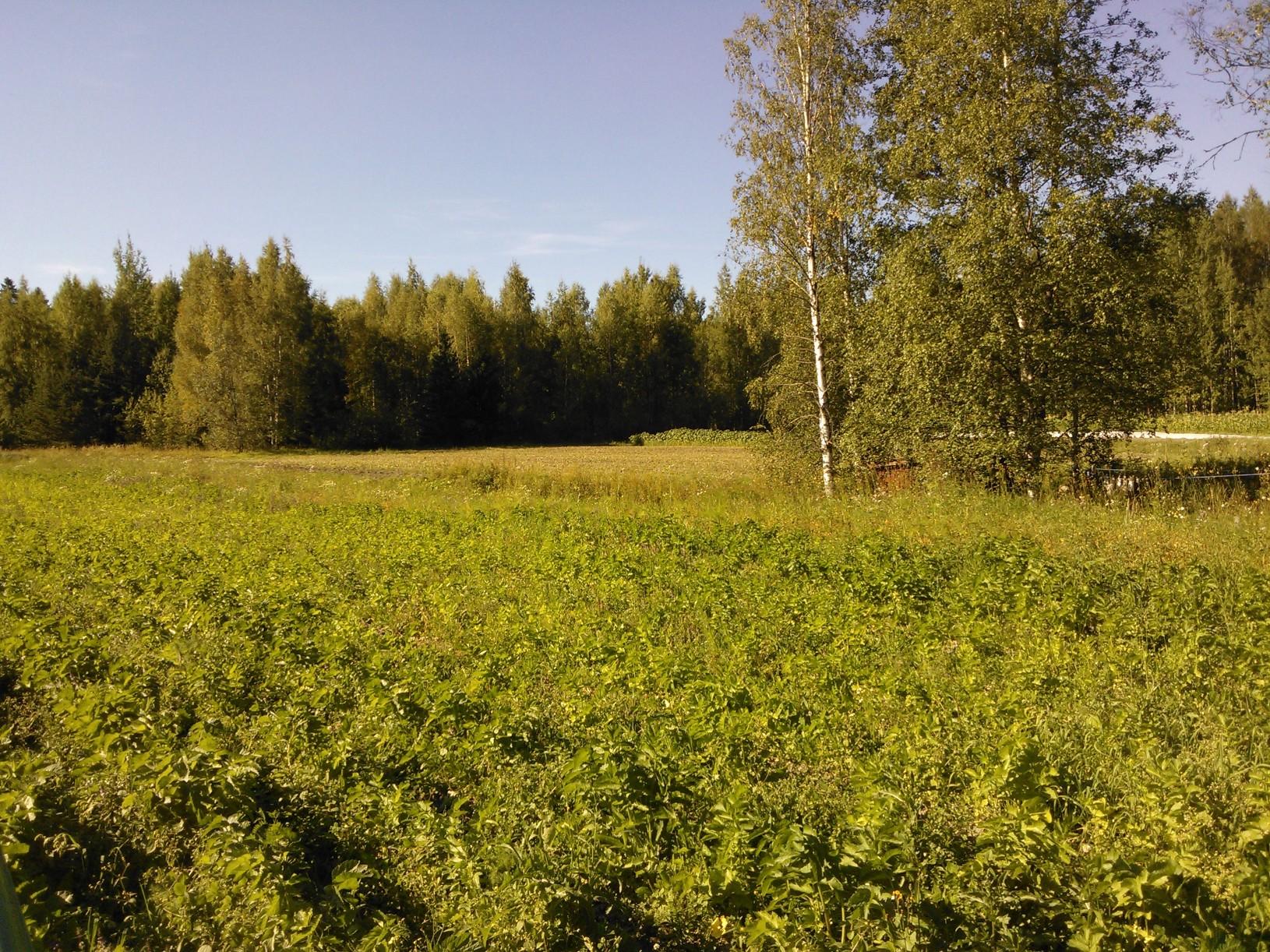 elokuinen pelto, ei vielä käytetty
