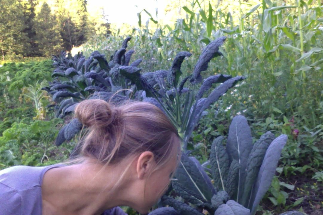 Heidi, lehtikaalit, palmukaalit ja maissit