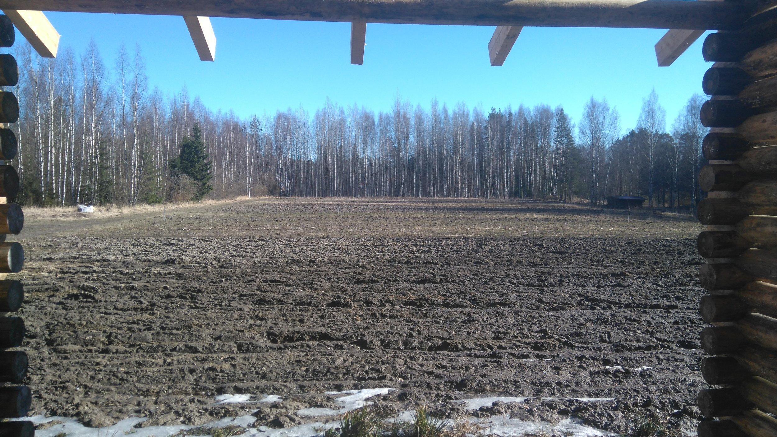 Maisema saapuessani pellolle