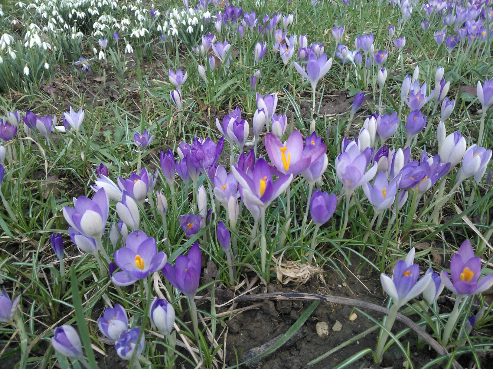 Kevät kukkii