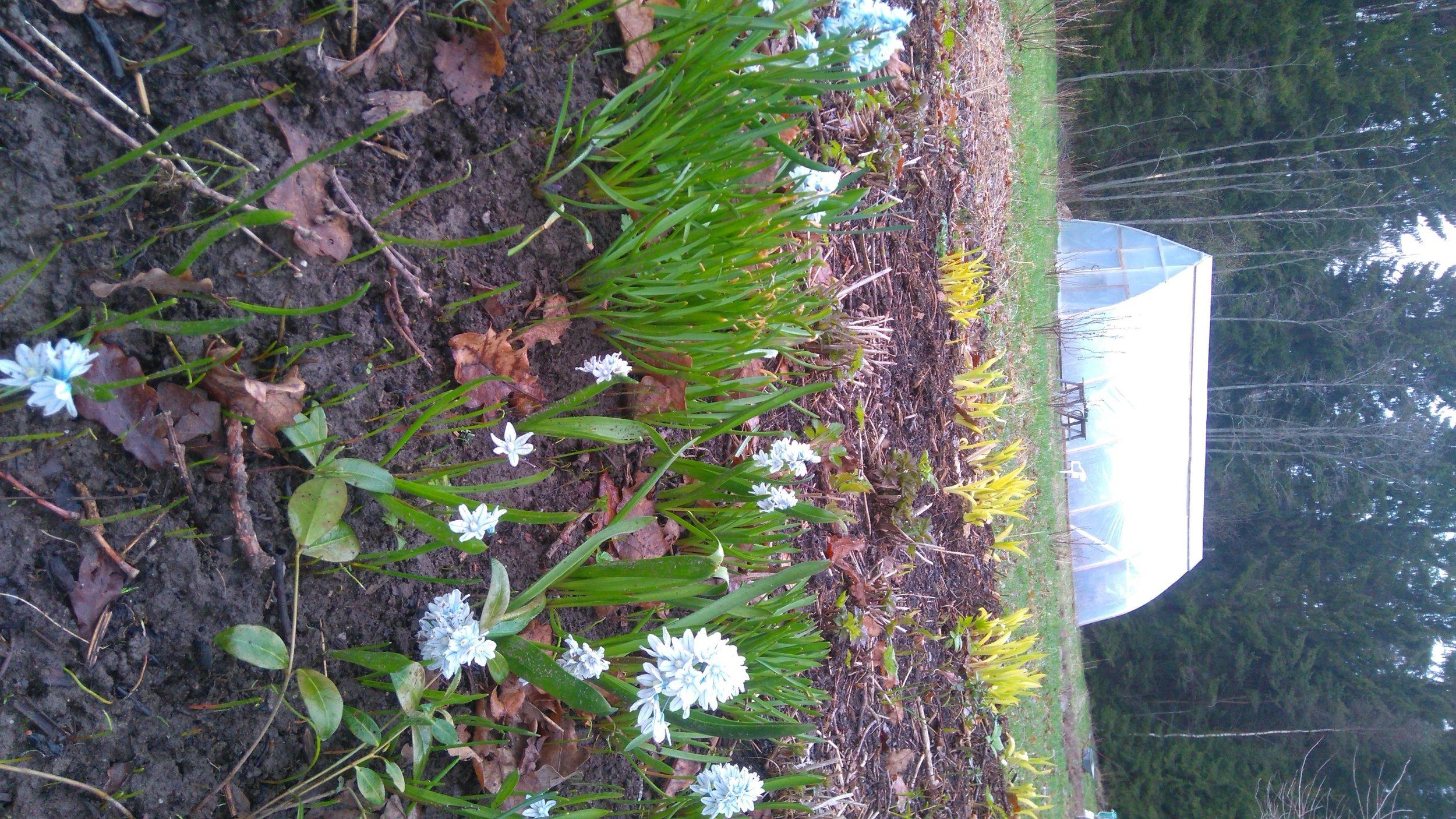 Mustosen puutarhan kevät