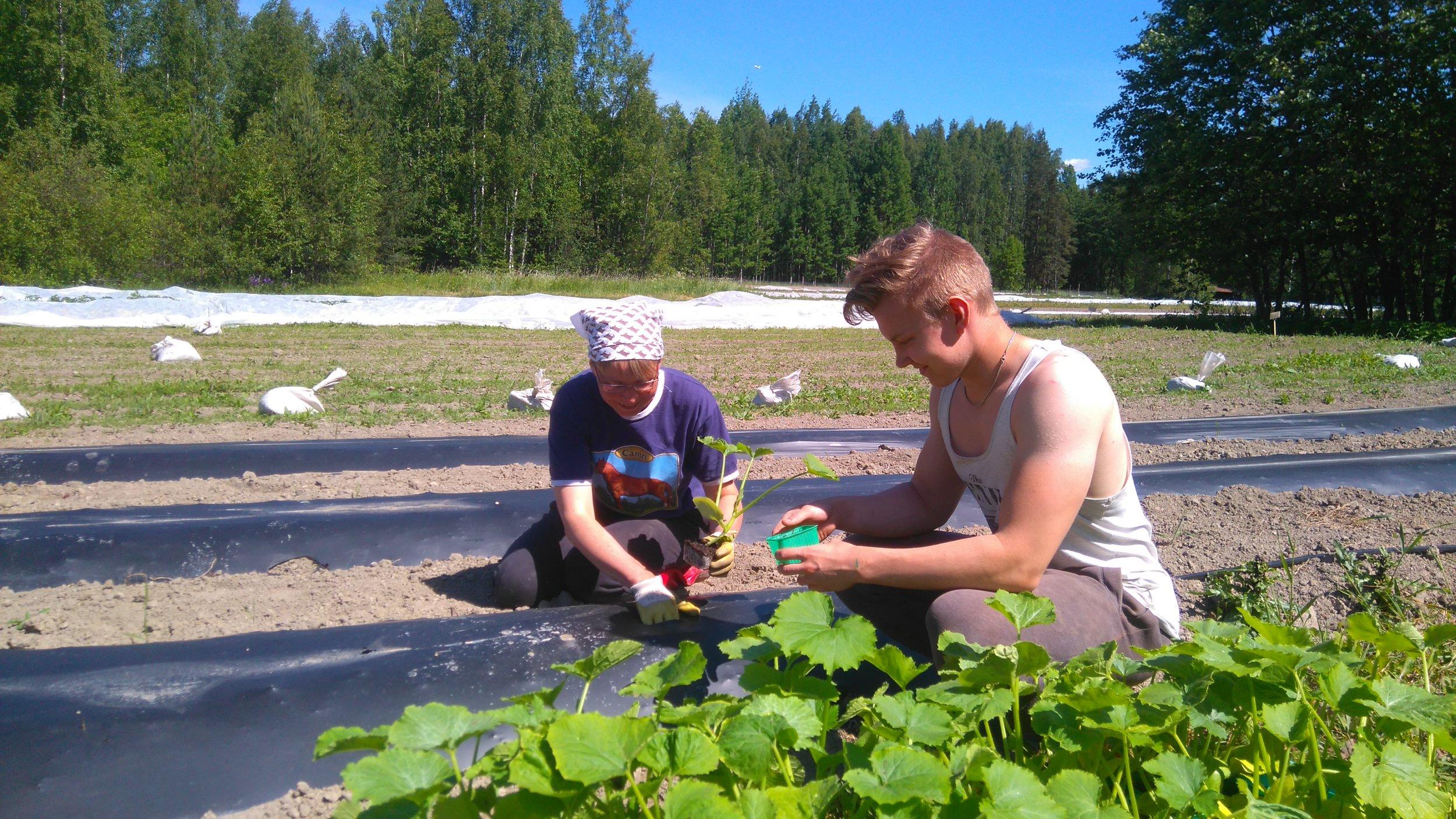 Mikko ja Nina istuttavat kesäkurpitsaa