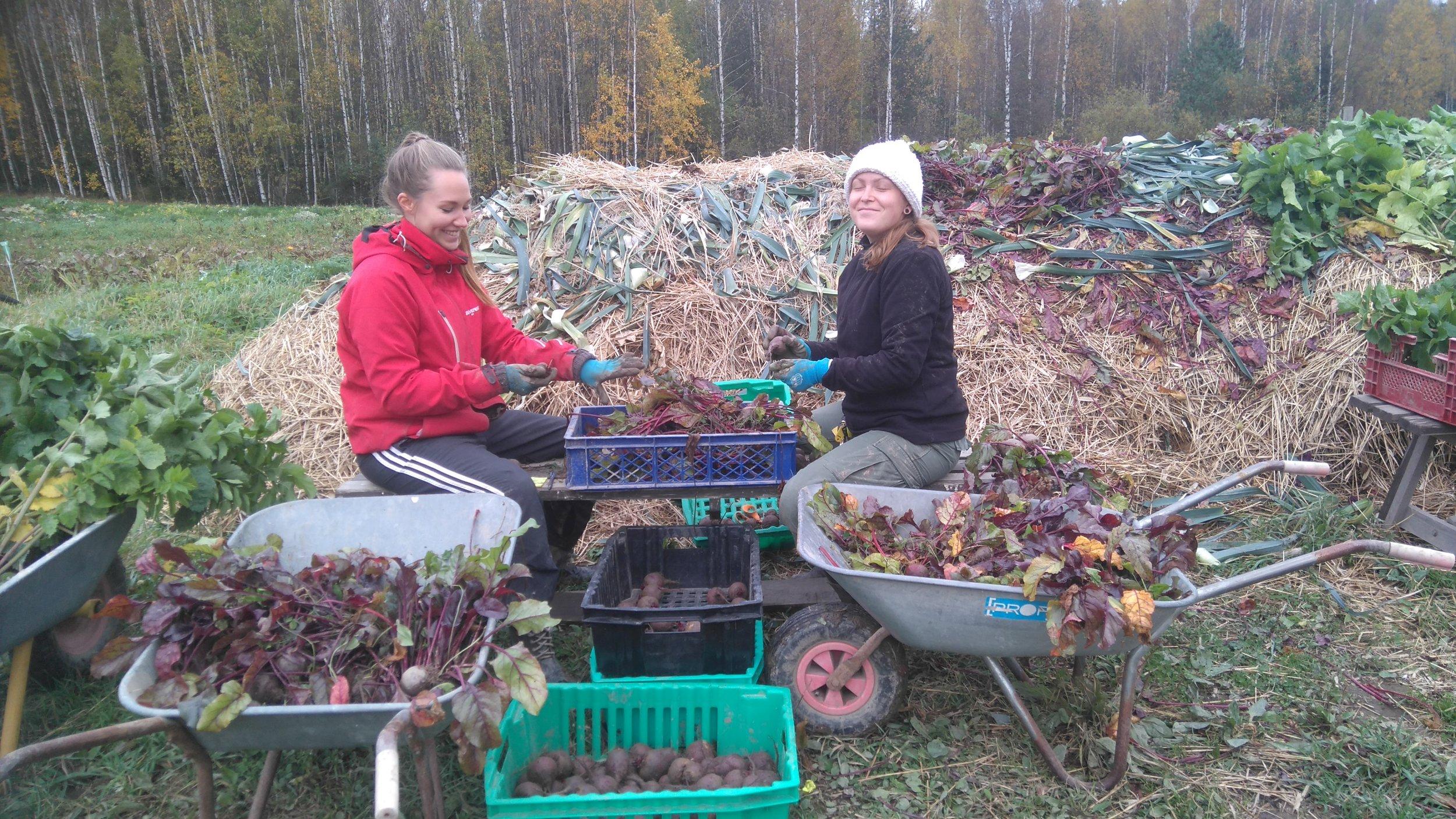 Punajuuren kauppakunnostusta ala Mari-Johanna & Minna
