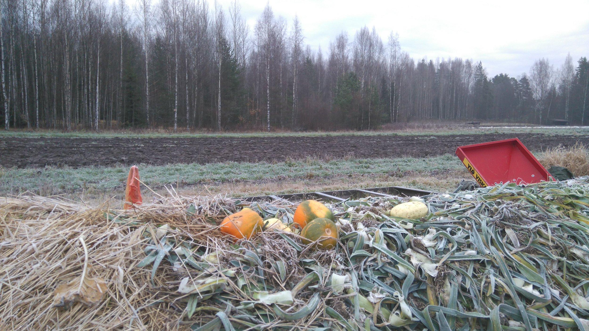 Komposti & Omapelto