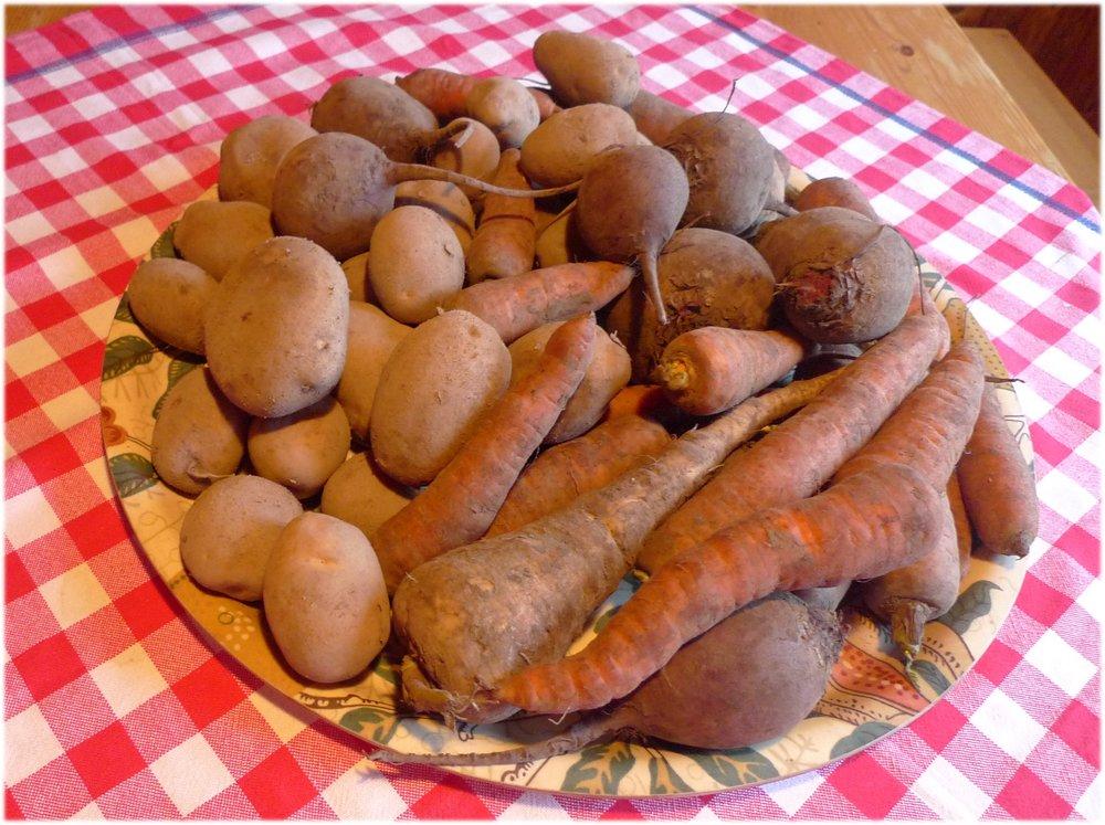 12.11.2013. palsternakka 213 g, porkkanat 1708 g, punajuuret 1533 g, ja perunat 2260 g.