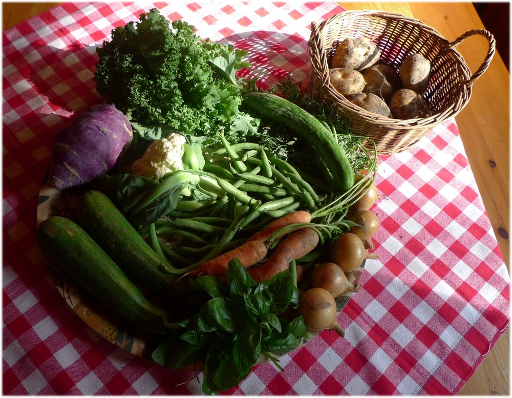 20.8.2013: perunoita 907 g, kurkku 142 g, kesäkurpitsat 583 g, sipulit 292 g, kukkakaali 192 g, kyssäkaali 555 g, porkkana 317 g, vihreät pavut 463 g, lehtikaali 121 g ja basilikaa 13 g.