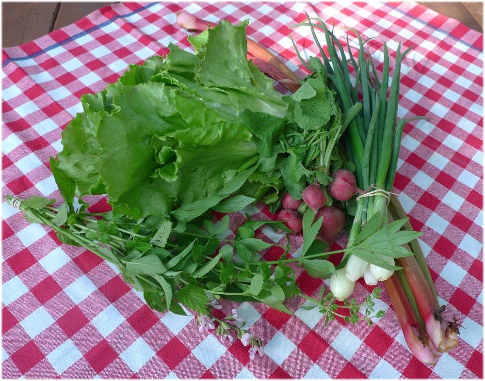 25.6.2013: salaatinkerä, sipulinippu, retiisejä, raparperia, yrttejä