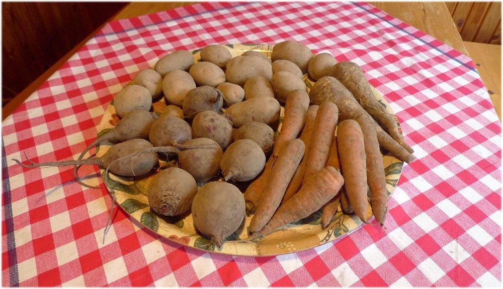 26.11.2013: palsternakat 345 g, porkkanat 851 g, punajuuret 1100 g ja perunat 1506 g.
