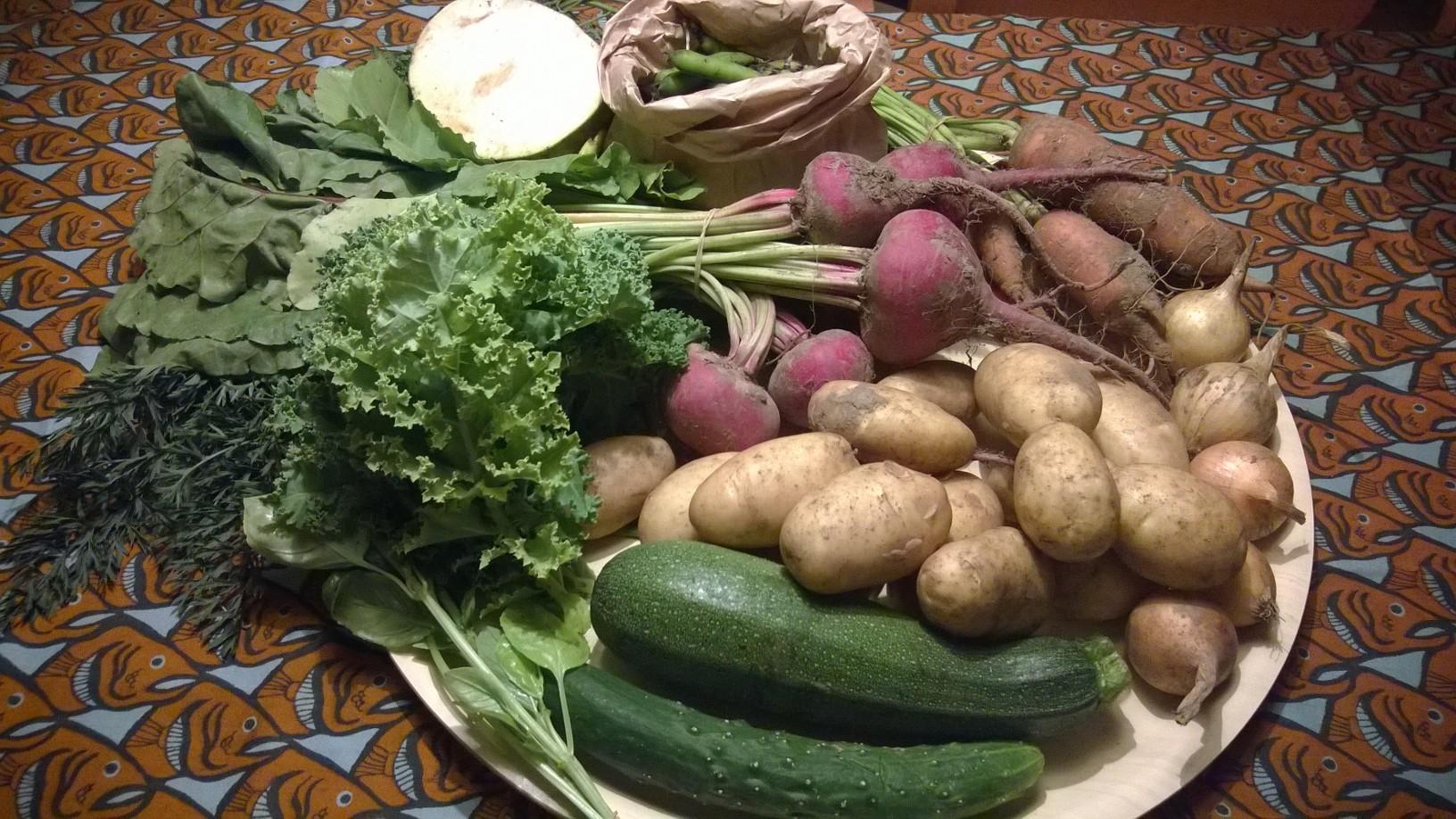 Porkkanat naatteineen 585g, herne 402g, kurkku 136g, kesäkurpitsa 328g, basililka 28g, sipuli 218g, raitajuuri 762g, lehtikaali 69g, peruna 1kg, lanttu 505 g