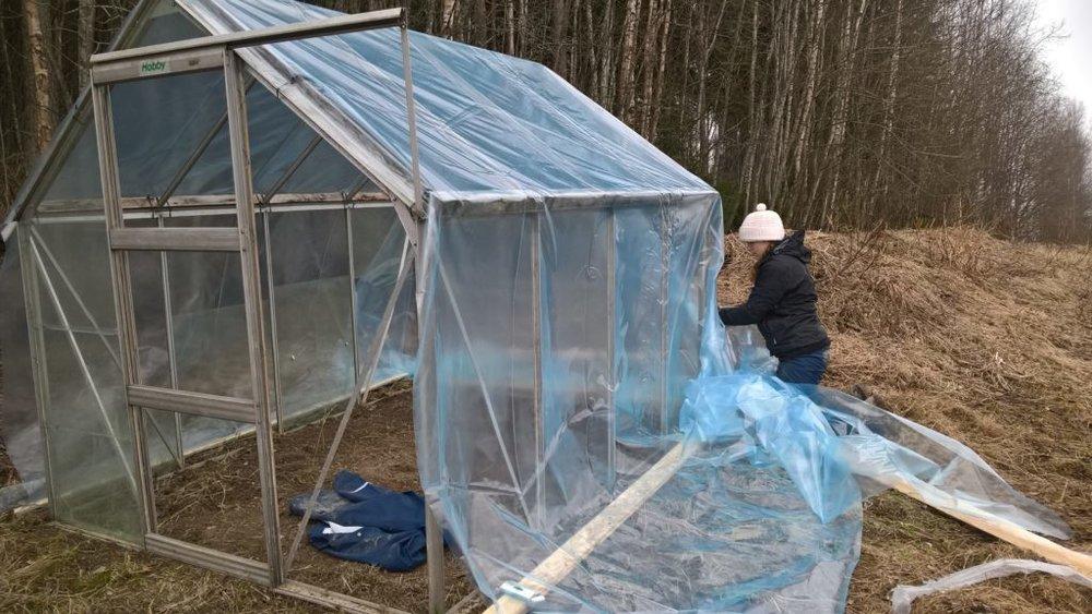 Mari-Johanna muovittaa pientä taimihuonetta