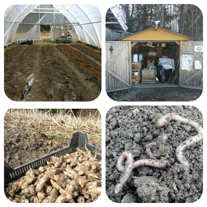 Muokkausta odottavaa kasvihuonetta, työkaluvaraston inventointia, maa-artisokkien hehkua ja puutarhurin kiireisiä työtovereita.