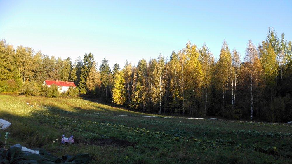 Ruskan väreistä saimme nauttia tänä vuonna erityisen pitkään, ja tulen sävyissä hehkuvat lehdet reunustivat peltoakin viikkoja. Ihanaa!